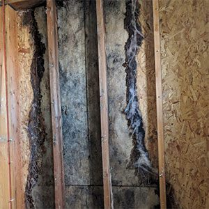 Mold damage to side wall of a boise idaho home due to a leaking roof