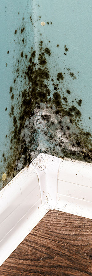 mold on a wall in a nampa idaho home needing nampa mold remediation help