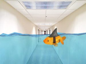 Office hallway with water and a goldfish floating indicating water damage cleanup is needed in a boise idaho office