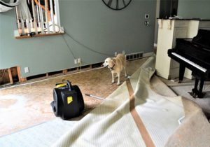 water damage in a boise idaho home with a blower drying sheetrock and carpet pulled back