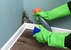 3-Factors-To-Look-At-When-Shoosing-A-Mold-Removal-Company-In-Boise