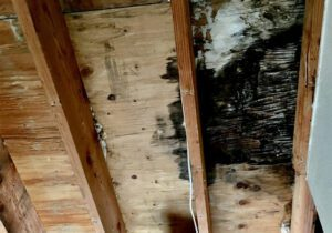 3-Steps-To-Get-Rid-Of-Mold-And-Prevent-Future-Mold-Growth3-Steps-To-Get-Rid-Of-Mold-And-Prevent-Future-Mold-Growth