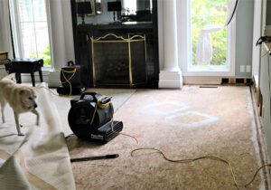 How-Water-Damage-And-Restoration-Professionals-Can-Help-You