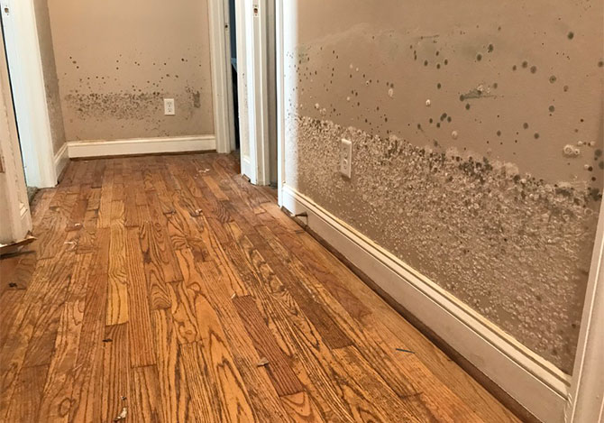 Water damage and mold in a house due to flooding